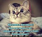 https://lolkot.ru/2020/04/01/martovskiy-privet/
