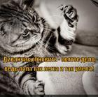 https://lolkot.ru/2014/01/30/master-na-vse-lapy/