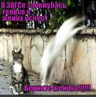 https://lolkot.ru/2015/07/18/master-teleportatsii/