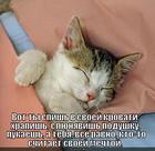 https://lolkot.ru/2012/10/09/mechta/