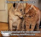 https://lolkot.ru/2013/09/14/mesto-vstrechi/