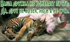 https://lolkot.ru/2016/04/21/mezhvidovaya-druzhba/