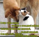 https://lolkot.ru/2012/10/18/miskoyu-yedy-klyanus/