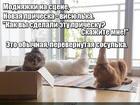 https://lolkot.ru/2017/01/27/modnaya-pricheska/