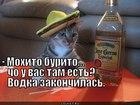 https://lolkot.ru/2012/04/25/mohito-burito/