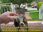 https://lolkot.ru/2010/10/13/molochnik/
