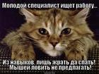 https://lolkot.ru/2014/01/21/molodoy-spetsialist/