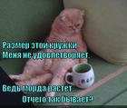 https://lolkot.ru/2014/12/27/morda-rastuschaya/