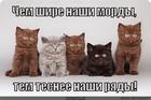 https://lolkot.ru/2012/06/26/mordy/