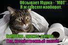 https://lolkot.ru/2014/02/25/motik/