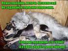 https://lolkot.ru/2017/09/13/moy-podarochek/