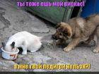 https://lolkot.ru/2011/06/07/moy-viskas/