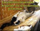 https://lolkot.ru/2013/03/31/moya-tvoya-ne-ponimat/