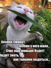 https://lolkot.ru/2020/07/29/mstitelnoye-obezzeleneniye/