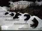 https://lolkot.ru/2010/08/19/mucheniya-kote/