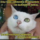 https://lolkot.ru/2014/01/27/muki-vybora-5/