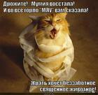 https://lolkot.ru/2014/02/20/mumikoshka/