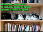 https://lolkot.ru/2017/06/09/murchascheye-lekarstvo/
