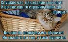 https://lolkot.ru/2014/12/07/murchaschiy-koshachiy-son/