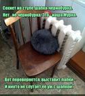 https://lolkot.ru/2016/09/29/murka-chernoburka/