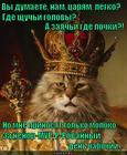 https://lolkot.ru/2015/02/28/murma-dnya/