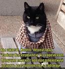 https://lolkot.ru/2014/07/07/my-na-etom-dele-sobaku-seli/