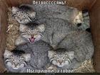 https://lolkot.ru/2011/02/12/my-prishli-za-toboy/