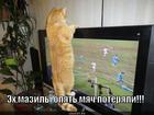 https://lolkot.ru/2013/07/21/myach-poteryali/