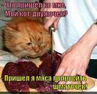 https://lolkot.ru/2014/11/17/myasyao/