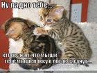 https://lolkot.ru/2010/06/11/myshelovka-v-lotoke/
