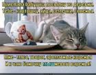 https://lolkot.ru/2014/09/13/myshnevoye-varene/