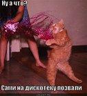 https://lolkot.ru/2011/12/05/na-diskoteku-pozvali/