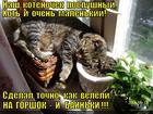 https://lolkot.ru/2013/08/07/na-gorshok-i-bainki/