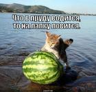 https://lolkot.ru/2013/08/14/na-lapu-dali/