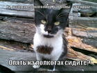https://lolkot.ru/2012/02/29/na-lolkotah-sidite/