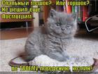 https://lolkot.ru/2014/05/16/na-meste-reshim/