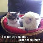 https://lolkot.ru/2012/12/18/na-podselenii/