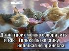 https://lolkot.ru/2015/03/02/na-troih-2/