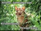 https://lolkot.ru/2014/12/07/na-trope-voyny-3/