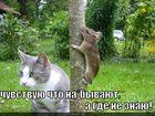 https://lolkot.ru/2011/11/14/nabyvayut/
