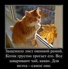 https://lolkot.ru/2016/11/07/nachinayuschiy-poet/
