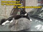 https://lolkot.ru/2016/10/29/naglost-vot-moy-bilet/