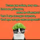 https://lolkot.ru/2016/05/12/naglyadnaya-otmazka/