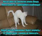 https://lolkot.ru/2016/05/26/naglyadnoye-posobiye/