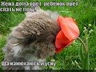 https://lolkot.ru/2012/05/29/nanyuhayus-i-usnu/