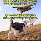 https://lolkot.ru/2013/12/10/narodnaya-primeta-2/