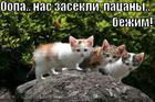 https://lolkot.ru/2010/10/21/nas-zasekli/