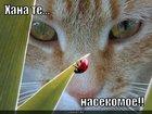 https://lolkot.ru/2010/06/09/nasekomoye/