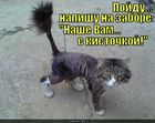 https://lolkot.ru/2010/10/14/nashe-vam-s-kistochkoy/