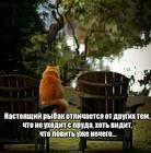 https://lolkot.ru/2020/01/10/nastoyaschiy-rybak-2/